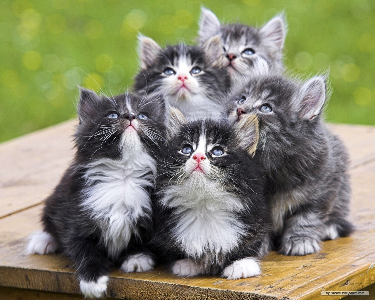 free cute animal pictures - celeb wallpapers | wallpapers of
