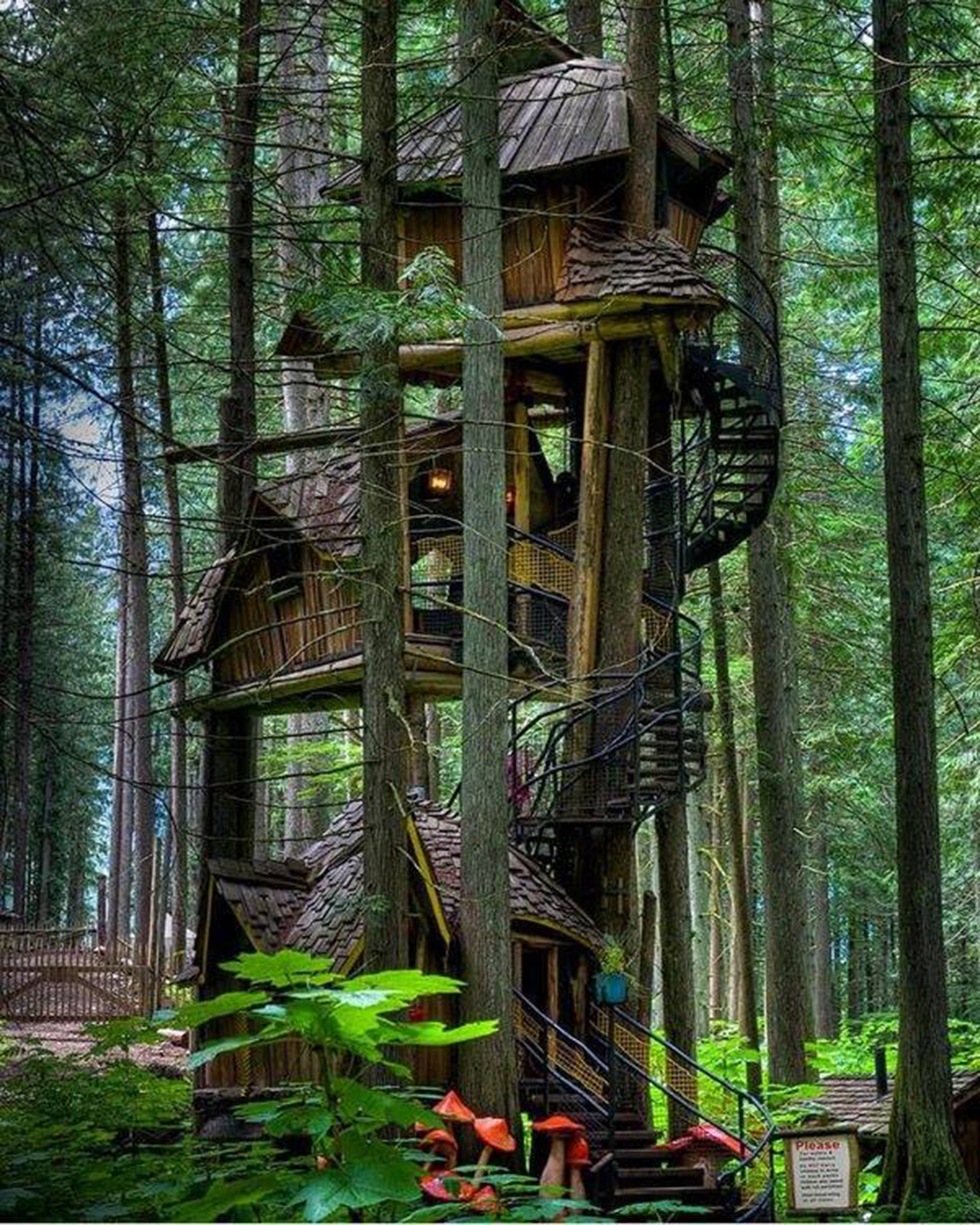 Tree House Celeb Wallpapers Wallpapers Of Celebrities